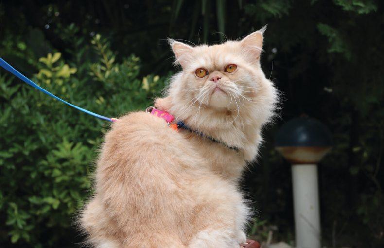 پوچ گربه چیست؟