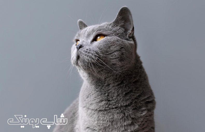 همه چیز درباره تشویقی گربه