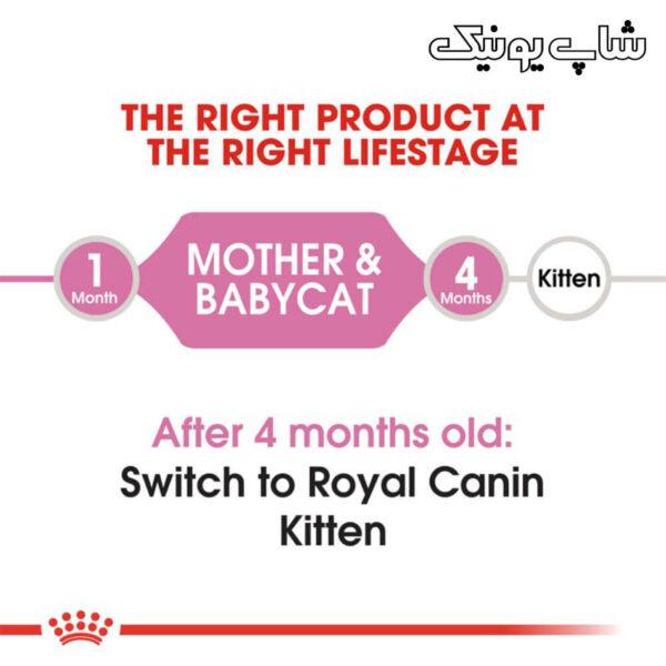 رده سنی غذای خشک گربه رویال کنین مادر اند بیبی مدل Mother & Babycat